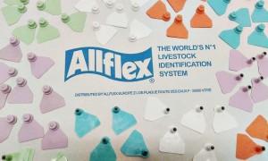 Prazna barvana znamka za interno označevanje drobnice in prašičev