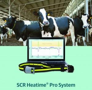 plodnost goveda, heatime, allflex, ovratnice za govedo