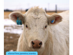 sensehub za dojilje, poporodni stres, predporodne težave pri kravah, zdravstveno stanje črede krav