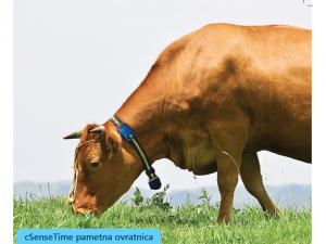 sensehub za dojilje, pametne ovratnice, spremljanje plodnost krav, scr, sensetime, kmetijski zavod bric